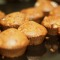 Low calorie apple and cinnamon muffins