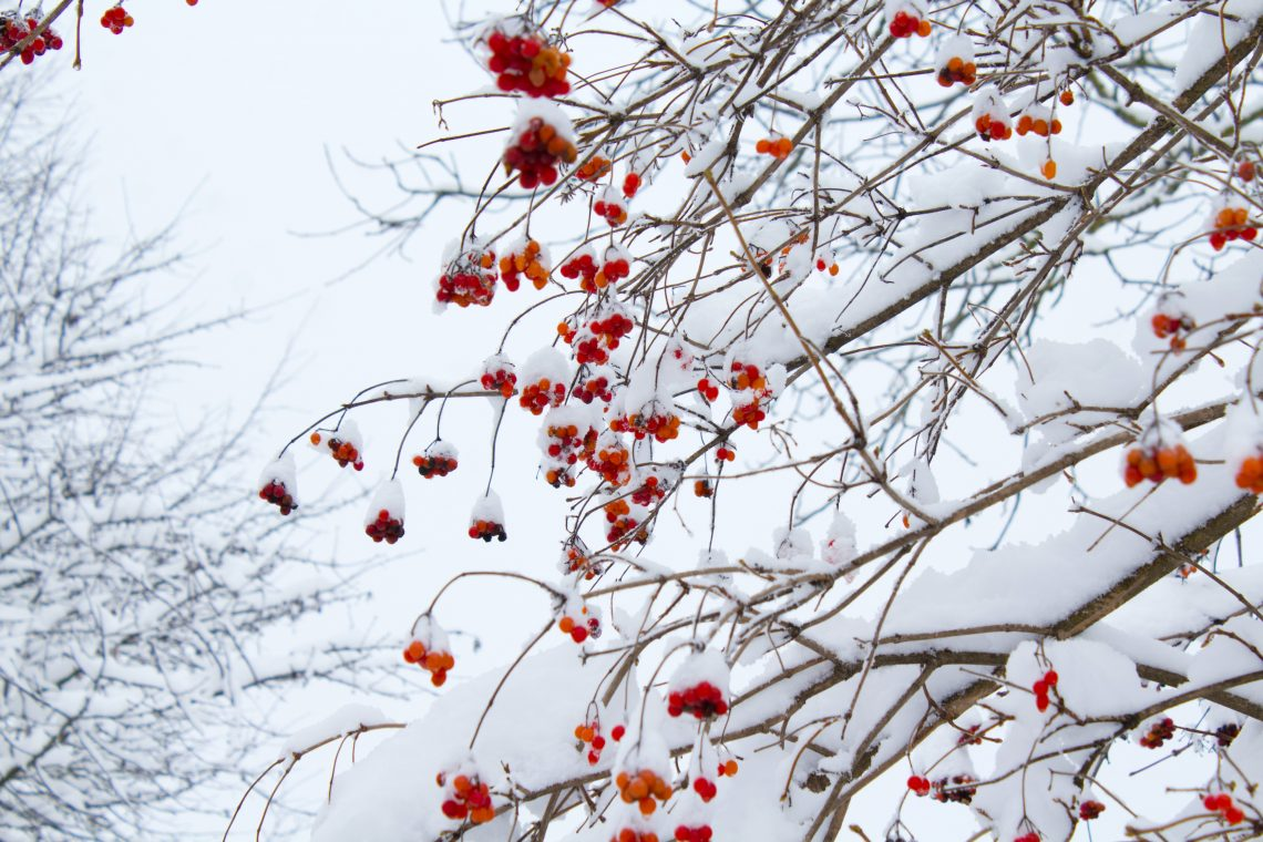 Why It's Never Too Late To Prepare For Winter