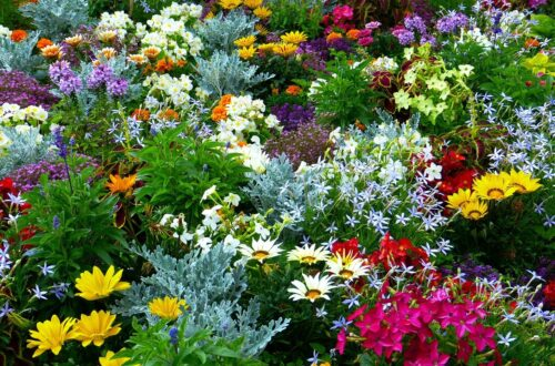 What to Consider When Selecting Plants for Your Garden
